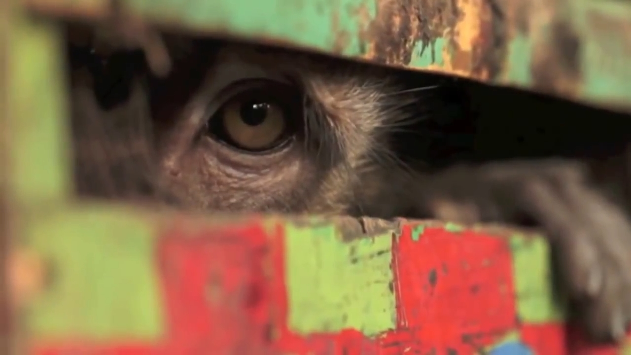 Masked Monkey - The Evolution of Darwin's Theory - trailer.mp4_snapshot_01.22_[2014.10.15_11.07.08]